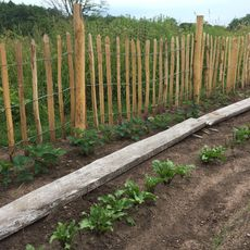 Chestnut Fence posts 160 cm
